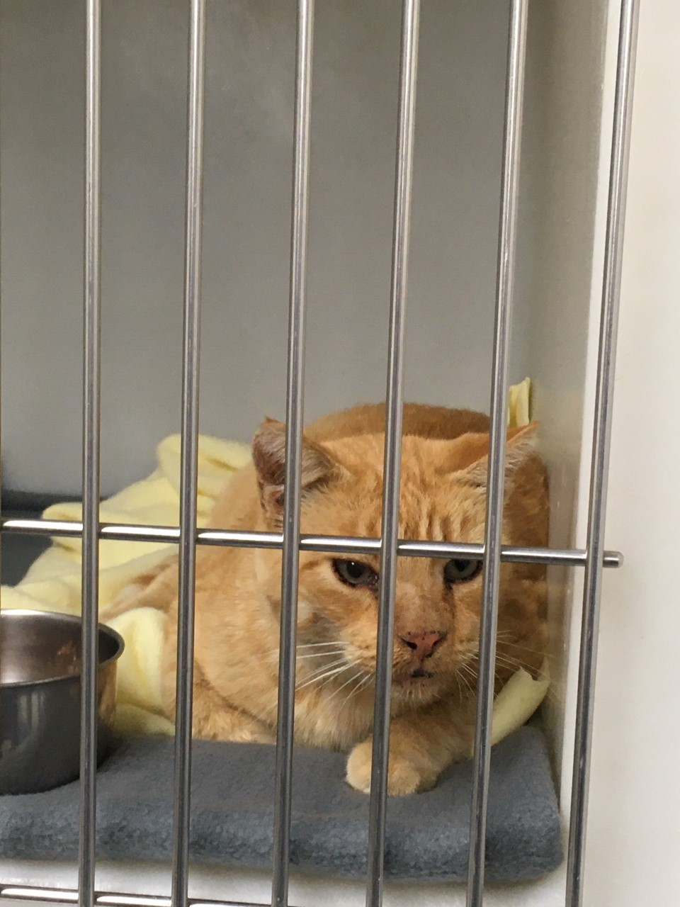This stray cat turned up at a La Grande resident's home about a month ago. Posted 9/26/2020.
