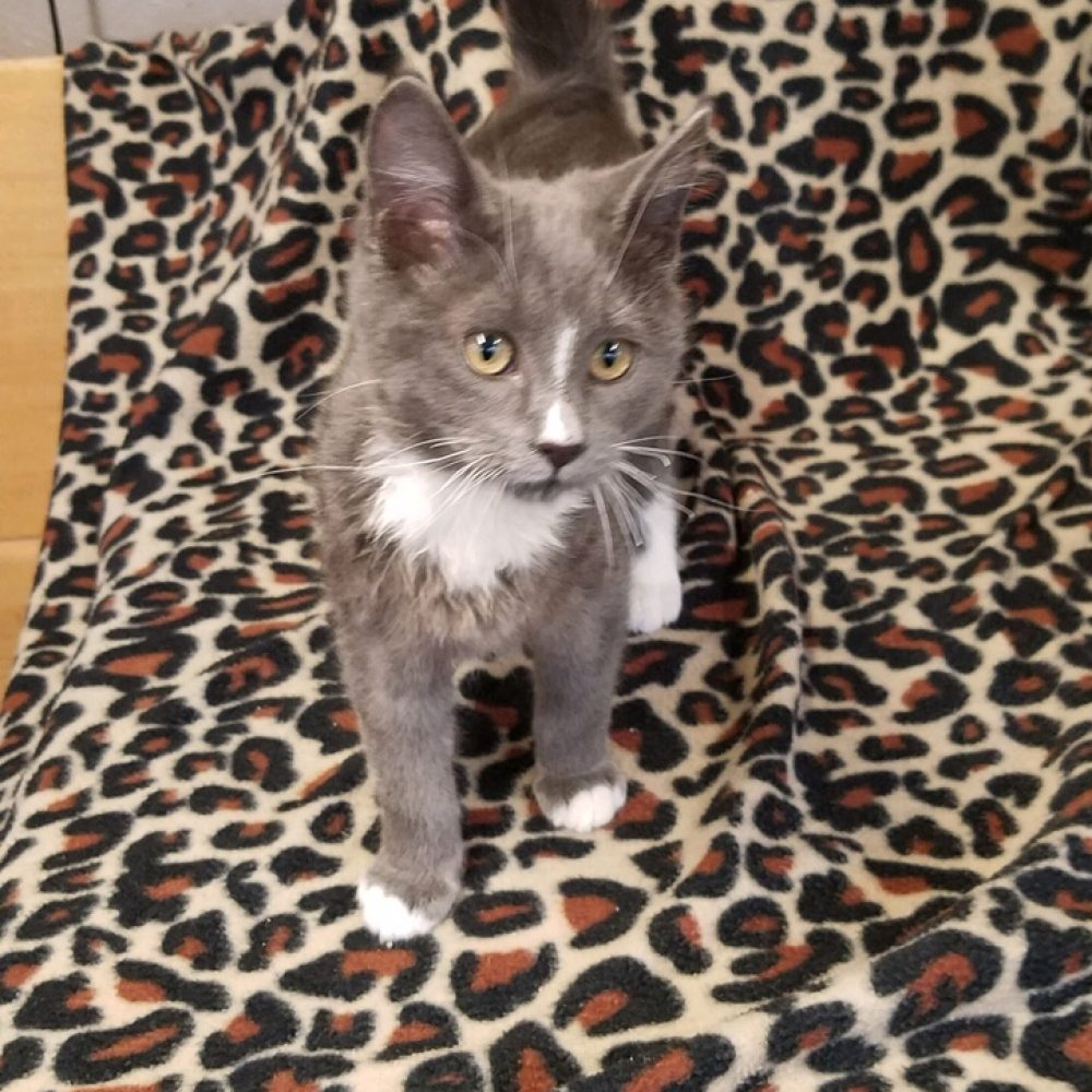 Breezy is a little girl who was born at the end of October. She is one of the Weather kittens.
