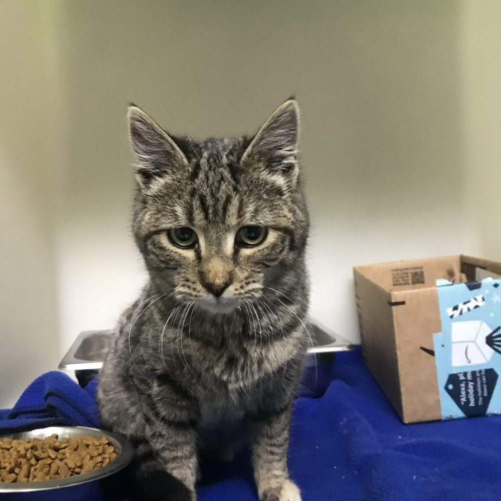 Chamomile  is a super sweet but shy 5 month old female.