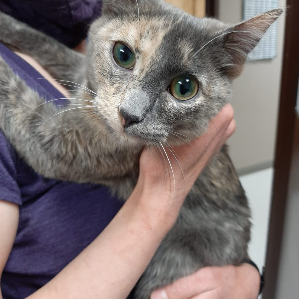 Zelda is a sweet girl who was born in September.