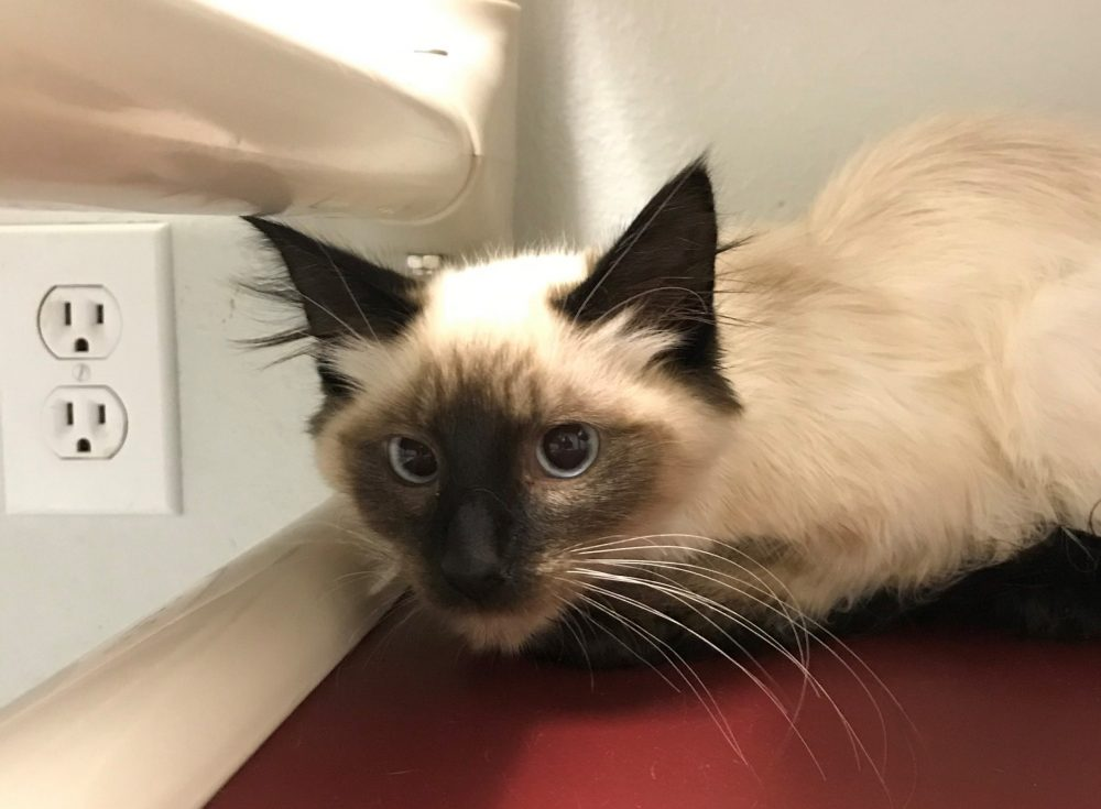 Havarti is a young male born in the middle of April.