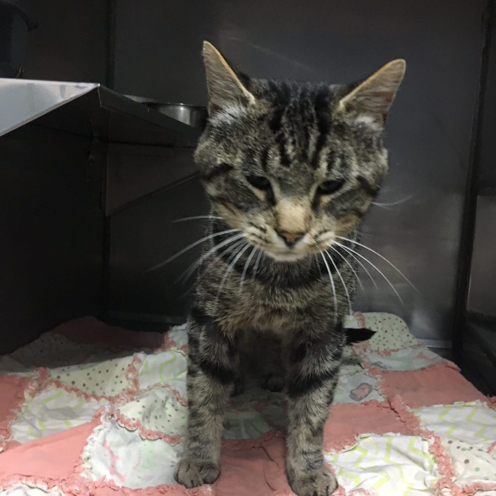 This stray was brought in on July 26 from La Grande.