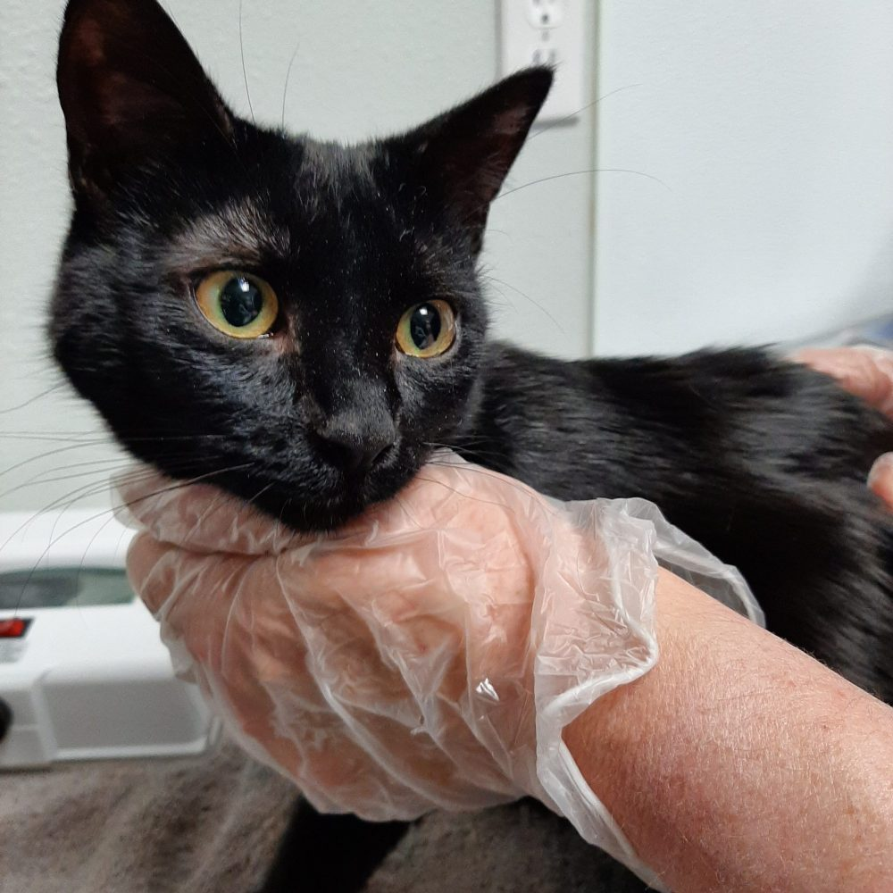 Okoye is a 1-year-old female, and an absolute sweetheart.