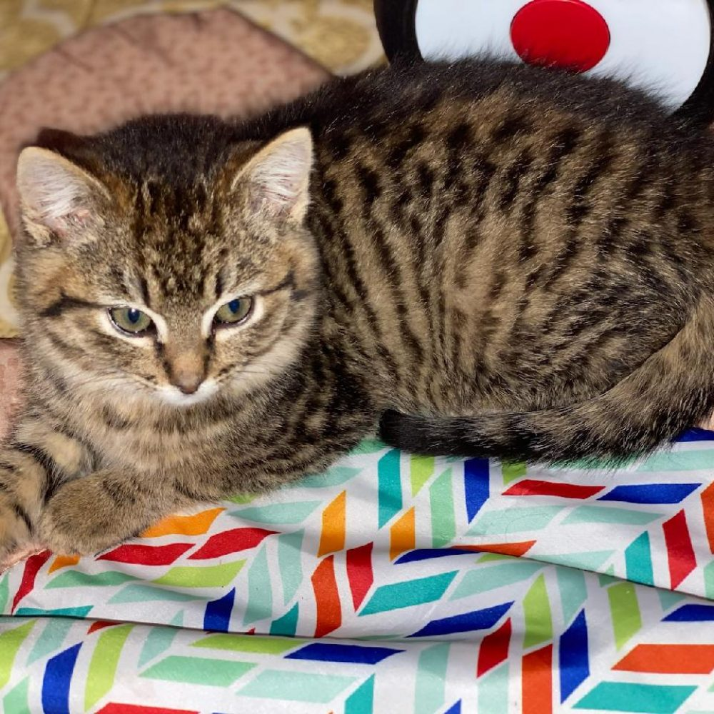 Tigger is a little girl who was born in the middle of November. She is siblings with Binx.